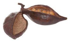 Dekorace kakaový lusk